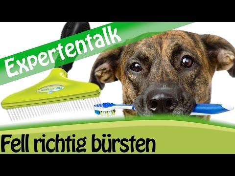 Fellpflege: Hundefell richtig bürsten - Expertentalk