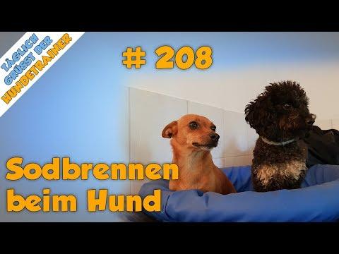 Sodbrennen beim Hund erkennen (Außerdem: 3 Tipps die beim Bekämpfen helfen können) - TGH 208
