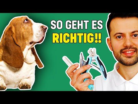 Krallen schneiden beim Hund (Tierarzt klärt auf)