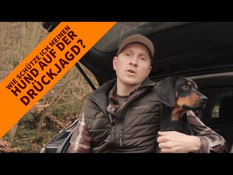 Interview zur Wahl der richtigen Hundeschutzweste: Wie schütze ich meinen Hund auf der Drückjagd?