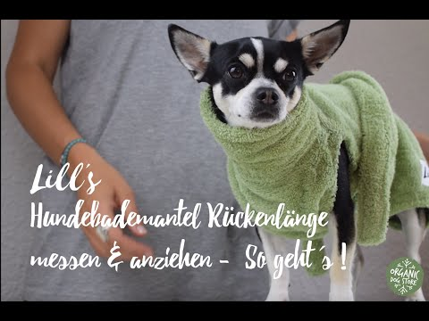 LILL'S HUNDEBADEMANTEL: RÜCKENLÄNGE MESSEN & ANZIEHEN - SO GEHT'S!