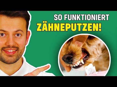 Wie dem Hund die Zähne putzen? - Tierarzt erklärt richtige Zahnpflege