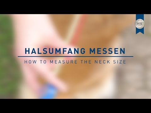 HOW TO - Halsumfang eures Hundes messen
