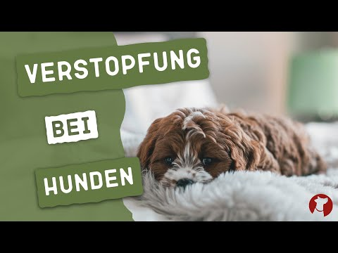 Was tun bei Verstopfungen beim Hund?