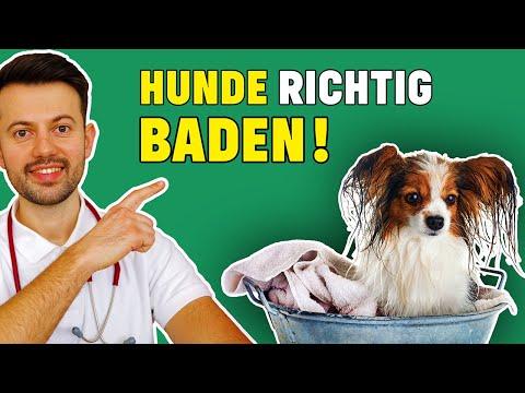 Sollte man Hunde baden? - Wichtige Tierarzt Tipps!