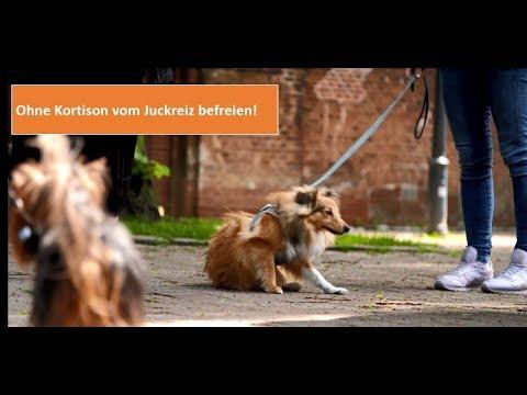 Juckreiz beim Hund kortisonfrei behandeln: Eine Tierärztin erklärt warum