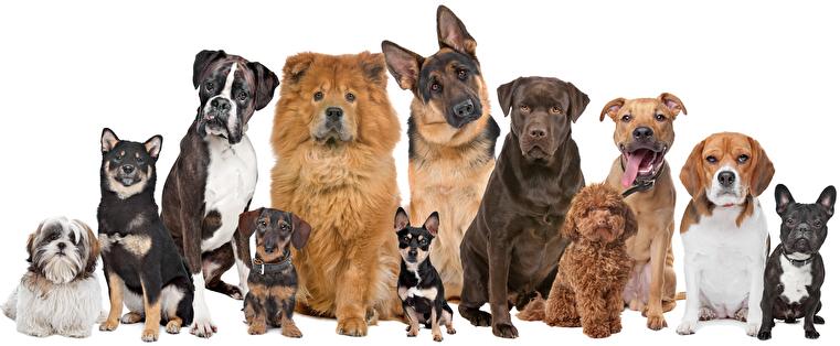 Hunde Tiermeister.de_headerbild
