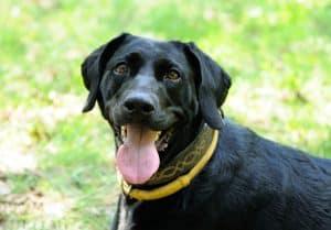 Flohhalsband Hund