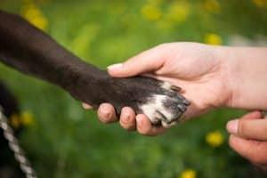 Krallenschleifer Hund