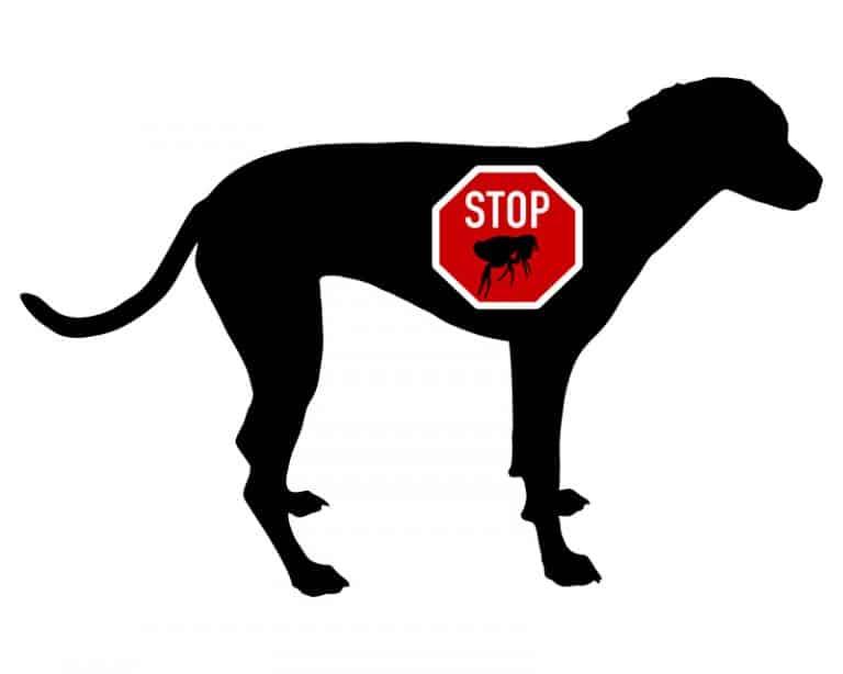 Flohmittel Hund