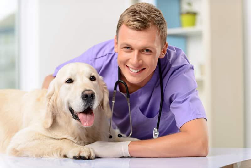Lebererkrankung Hund