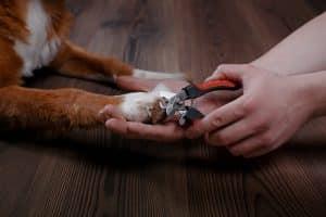 Krallenschere Hund