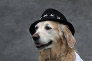Hundemütze
