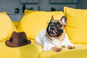 Hundeshirt mit Hut