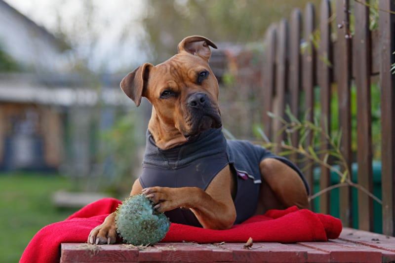 Hund mit Hundeweste