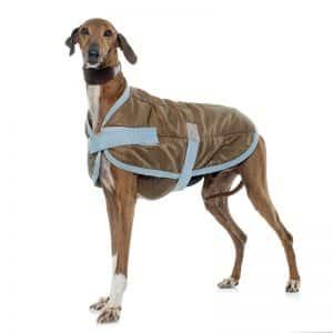 Softshellmantel bei einem Windhund