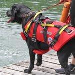 Hundeschwimmweste