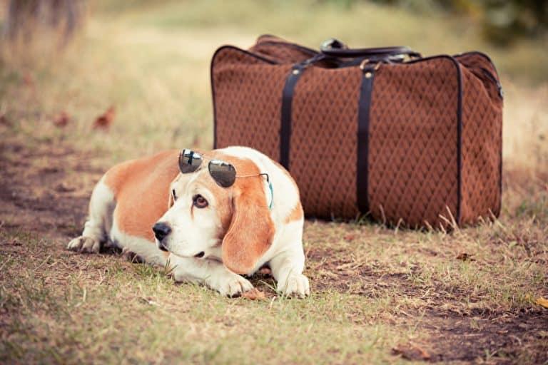 Hunde Accessoires