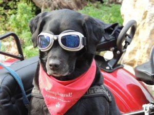 Hundebrille mit Hundehalstuch