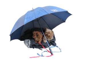 Regenschim für Hunde